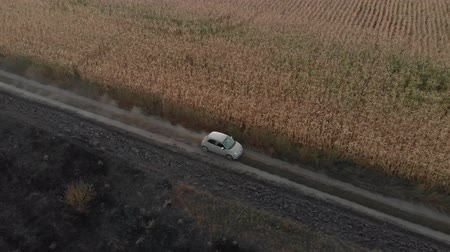 ekosistem : A small biege car is driving on a countryside dusty road near yellow corn field