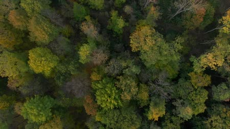 zálesí : Top down autumn wood. Nature background. Aerial top view of autumn forest with colorful trees. Trees with bright yellow foliage. Deciduous forest in the fall.