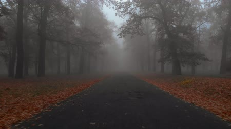 neúrodný : Camera flies over the road with brown autumn trees in mystical foggy autumn park, Ukraine