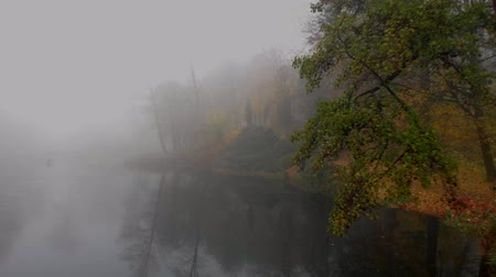 mokřadní : Aerial drone shot of colorful trees over small lake in fog in autumn park, Ukraine Dostupné videozáznamy
