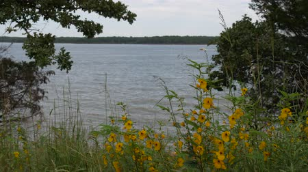 oklahoma : Wide shot of small yellow white flowers with the lake in the background
