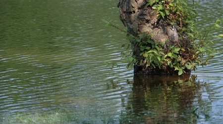 wavelets : Water in a pond flowing around a tree stump submerged in water