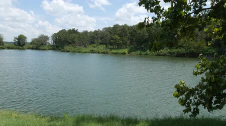 teszi : Steady shot of a lake with the wind blowing on the leaves of a tree
