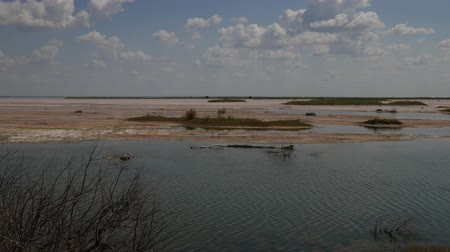 salt marsh : Steady footage of a flowing creek in a salt lake plain