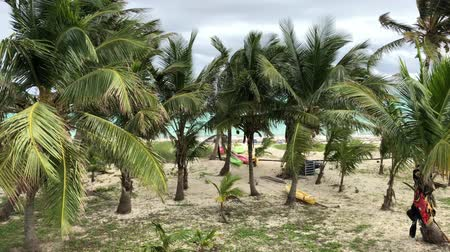 Steady shot of coconut trees swaying in the wind by the beach Стоковые видеозаписи