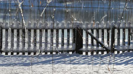 Steady shot of a wooden fence and ground covered with snow, with willow twigs swaying
