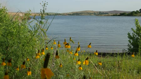 Steady shot of a scenic lakeside view with yellow flowers in the bank