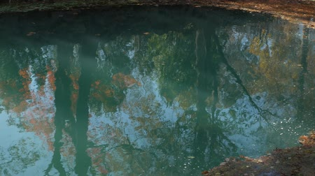 Steady shot of colorful leaves of trees reflected in the pool of blue waters in autumn Стоковые видеозаписи