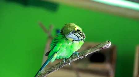 etosha : beautiful green parrot lovebird on colorful nature background
