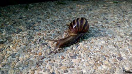 lerdo : snail crawling over terrace