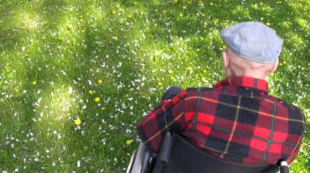 arka görünüm : Old man sitting in wheelchair enjoying  spring in the park. White apple tree blossom petals falling on a green grass. Shot from behind and above. Stok Video