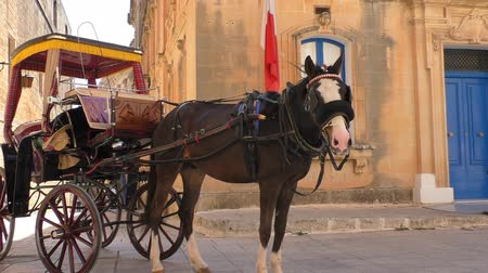 cavalo vapor : Horse and carriage or coach by the old town building decorated with Malta white red flag.