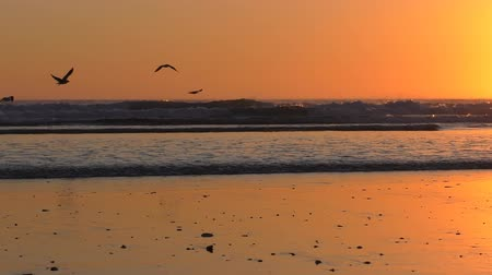 birds flying : Birds flying along flat beach in the orange sky at sunset