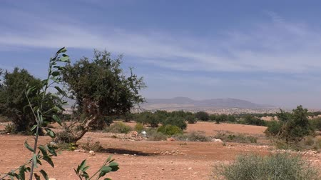 обычный : Typical Moroccan landscape with red arid land and argan trees and Anti-Atlas mountains in the background