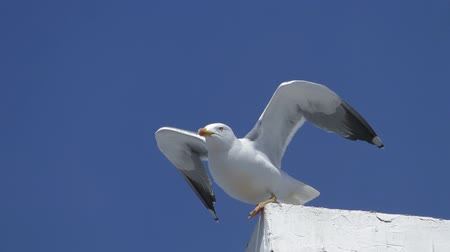 moscas : Seagull on the top of building is looking around and  then flying off. Low angle shot Stock Footage