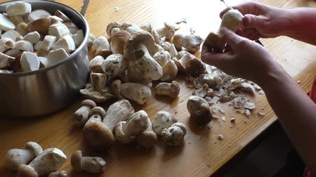 boletus edulis : Woman peeling and cutting into pieces cep or boletus edulis mushrooms