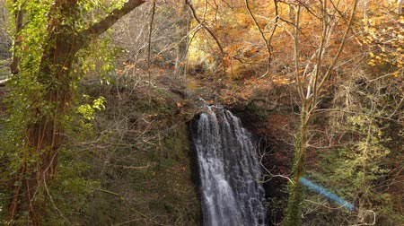 foss : Falling Foss waterfall tilt down shot in autumn colored forest in North Yorkshire, England, UK Stock Footage