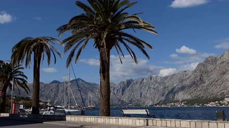 kotorska : Stunning scenery with palm trees and empty bench on promenade of Adriatic sea, Bay of Kotor on a sunny day