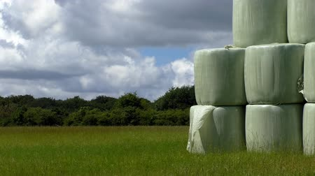 hay pile : Stack of white plastic hay bales on green meadow on a sunny summer day