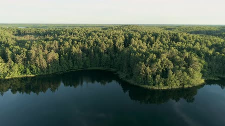 пьедестал : Aerial View of Amazing Lake in Dense Green Forest in Summer with Beautiful Sunlight, Belarus, Europe. Epic Ecotourism Place with Nature Landscape. 4K Pedestal Drone Shot Стоковые видеозаписи