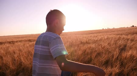 ninhada : Arty  view of a cheerful boy who goes along a yellow wheat field and touches upon its spikes on a sunny day in summer in slow motion. The beaming rays of sun make the shot impressive.
