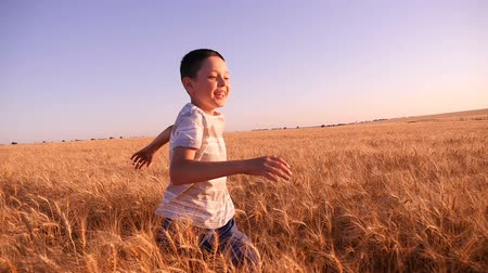ninhada : Wonderful view of a cheerful boy who runs along in yellow wheat field with ripe spikes on a sunny day in summer in slow motion. The beaming rays of sun make the shot impressive.