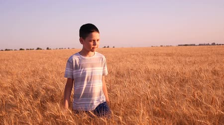 ninhada : Amazing view of a cheerful boy who goes along the ripe wheat field in Ukraine a sunny day in summer. The boy is full of positive emotions