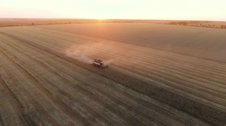 kombájn : A 180 degree bird`s eye view of a combine harvester threshing wheat on a striped field at sunset in summer. The skyscape is great and gorgeous. Stock mozgókép