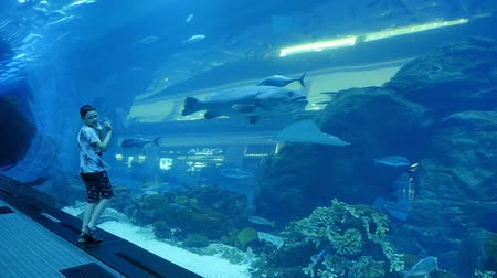 deset : An incredible view of a huge aquarium with big tropical fish in Dubai. A ten-year old boy touches its concave walls and looks at fish