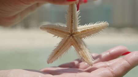 quebradiço : Closeup of a five arm sea star with brown and spiny surface in female hands with red makeup on a sunny and sandy beach in Dubai in summer