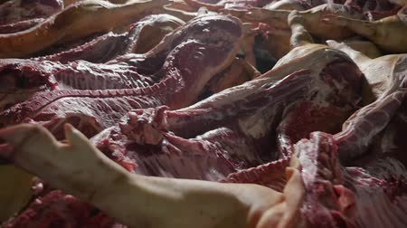 slashing : Bloody panoramic shot of raw swine bodies slashed in two halves lying on long tables in a spacious butchery. It looks like a creepy place. Stock Footage