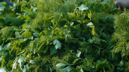 dereotu : Exciting macro shot of dill and parsley bunches with wet green leaves lying outdoors in a vegetable market on a sunny day in autumn Stok Video