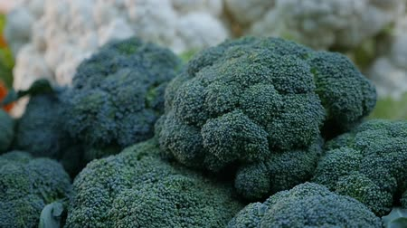 dotty : Splendid macro shot of green cauliflower heads having dark, spotty and spheric surface. They lie with other vegetables in a market in autumn. Stock Footage