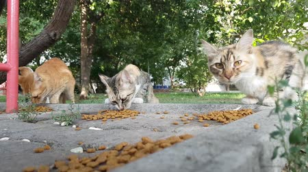 Stray cats eating dry food on pavement.