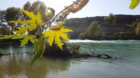 Wind shaking of autumn leaves on the river.
