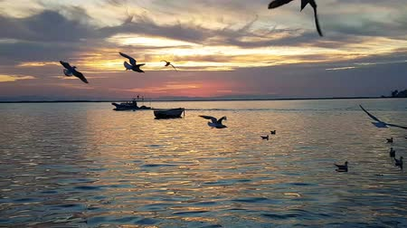 tourist silhouette : Seagulls flying and swimming on the sea in Izmir - Turkey. There is a fishing boat on the sea.