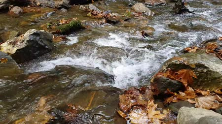 naturale : A river flows over rocks in autumn. Forest stream running over rocks. Pure fresh water and autumn leaves in forest.