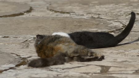 A small tortoise-scale kitten and a black and white one playing to make the fight