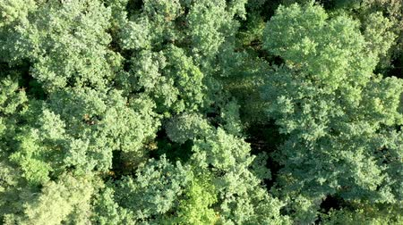 Aerial view of flying over a beautiful green forest in a rural landscape
