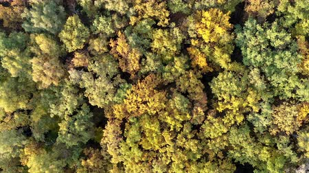 outonal : Aerial view from drone over colorful autumn trees.
