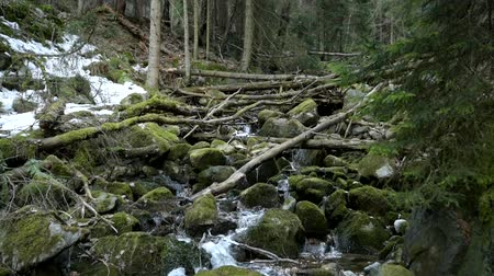 liken : Beautiful view of stream inside of pine forest
