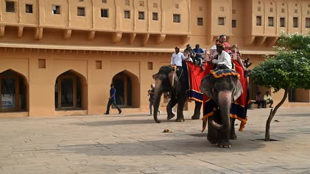 JAIPUR, INDIA - CIRCA NOVEMBER 2017: Unidentified man rides elephant Стоковые видеозаписи