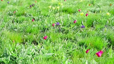 Spring landscape with blossoming wild flowers Stock Footage