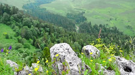 столовая гора : Scenic view of mountain meadow on Lago-Naki Стоковые видеозаписи