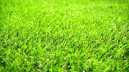 yuvarlanma : Green grass field moved by summer wind nature Stok Video