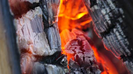 Bonfire in the forest. Close up shot. Wideo