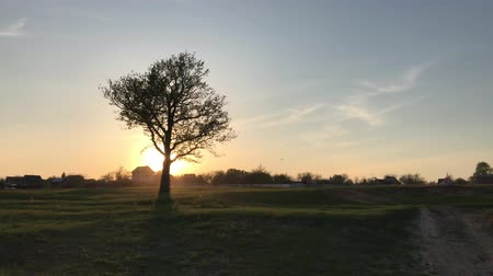 Enig boomlandschap over zonsondergang Stockvideo