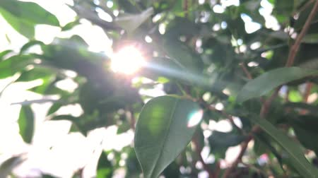 urlop : Green leaves almost defocused with sun back light