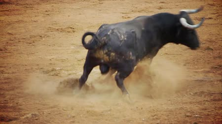 Барселона : Powerful spanish bull, bullfight arena