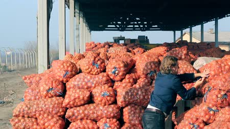 cebula : Onion storage ; farmer placed onions in storage,video clip